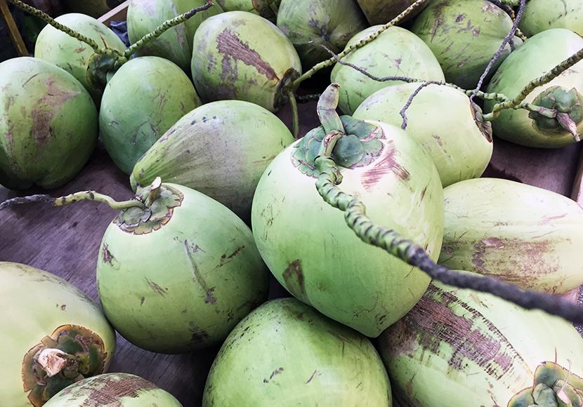 coconut-830x580